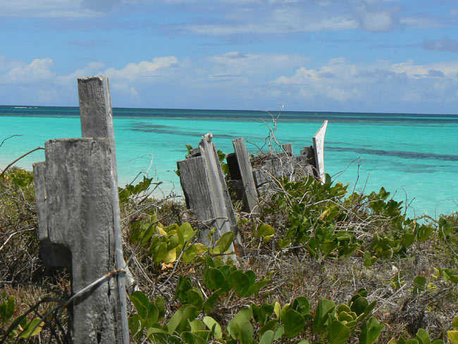 Caribbean claustra