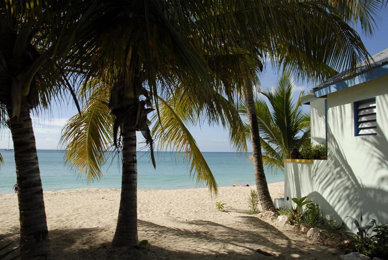 Simpson Bay Palm 2