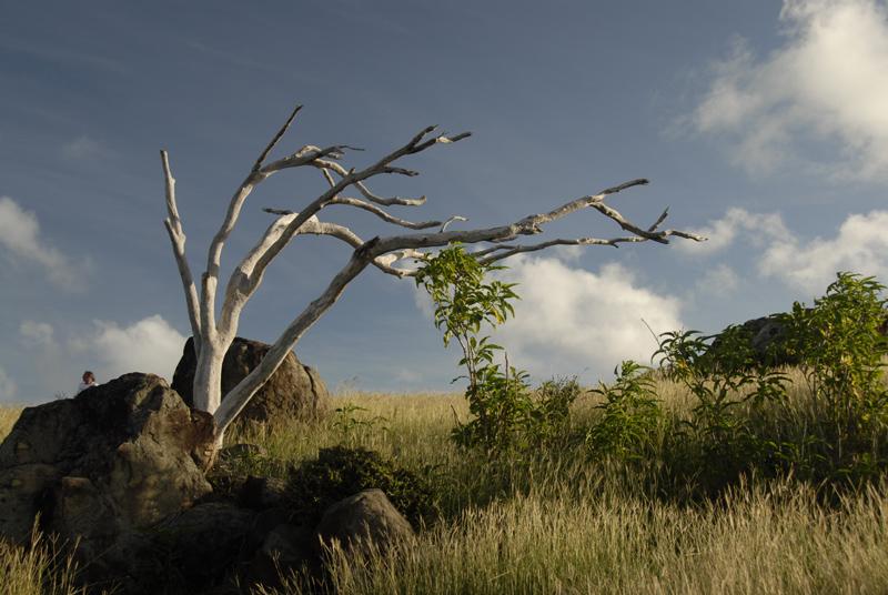Tropical Zen Tree