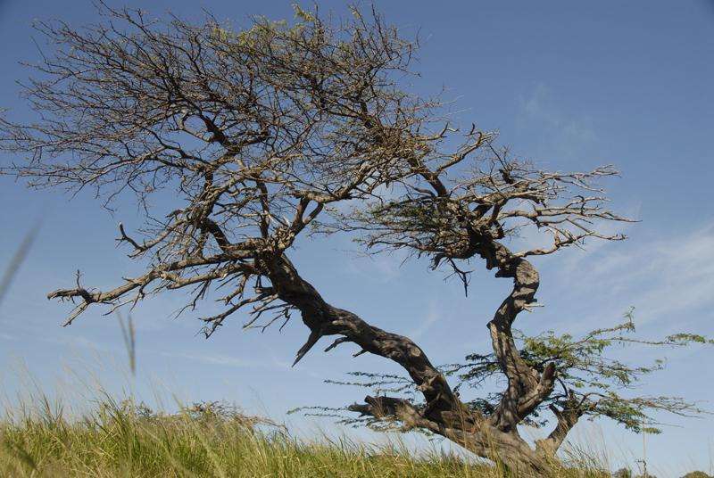 Tropical Zen tree 2